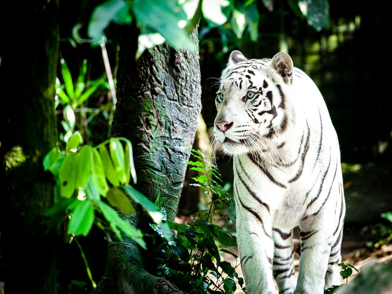 シンガポール動物園の魅力・行き方について!世界一美しい動物園で檻がない!?